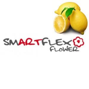 Smartflex Velvet citrón 4 kg